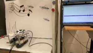 """Robot can """"listen"""" thanks to dead grasshopper's connected ear"""